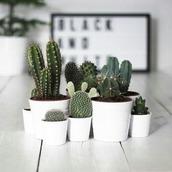 cactus_269