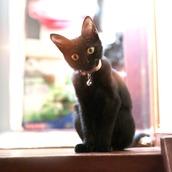 黒猫のマクシー
