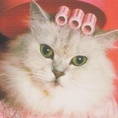catphile