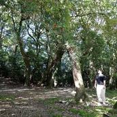 淡路島のシャーマン 桜
