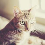 Mark cat