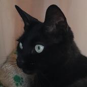 黒猫相談室