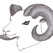 マゼンタ山羊座