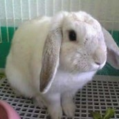 bunny_EVE