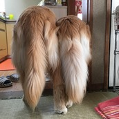 FluffyTail