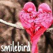 smilebird5050