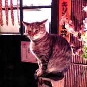 KuniakiShimizu