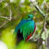 quetzally