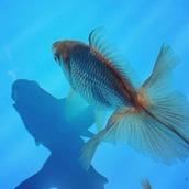 裏庭錦魚繁殖場