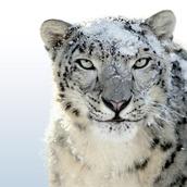 _SNOW_